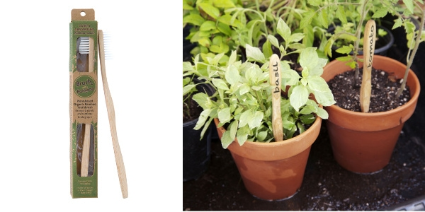 Bamboo toothbrushes and garden pots with toothbrushes as plant markers.