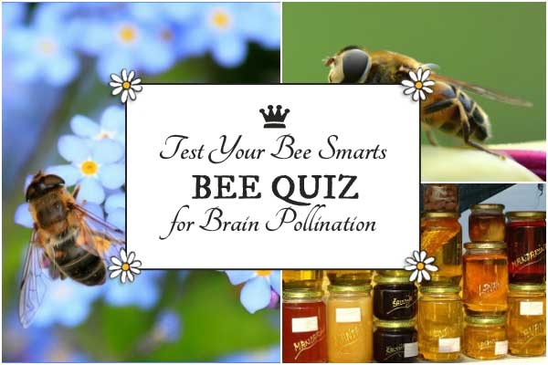 Test your bee smarts with this fun Bee Quiz. Bzzzzzzzz.