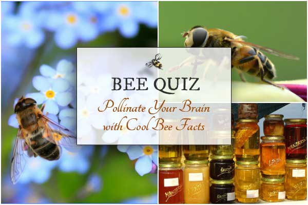 Take the Bee Quiz and Test Your Bee Smarts