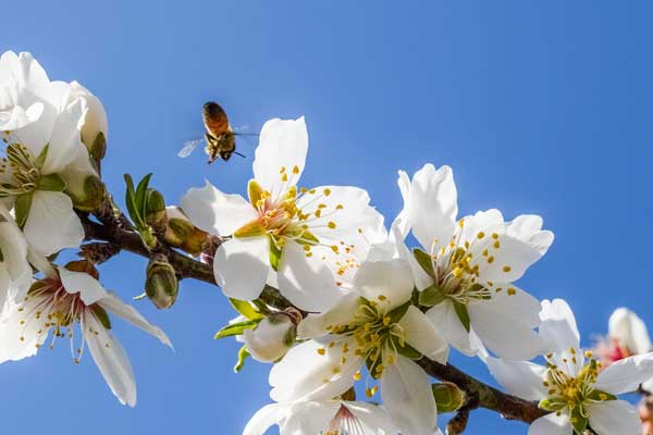 Threats to our bee populations in recent years have increased awareness of the essential role bees have on earth. Have a look at the list of plants that rely entirely on insect pollinaters including bees to produce their fruits and vegetables.