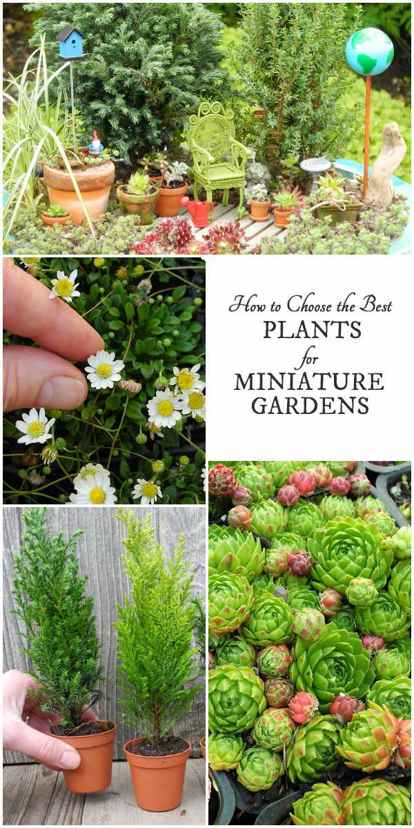 best garden plants. Best Plants For Miniature Gardens | Resource Guide Garden S