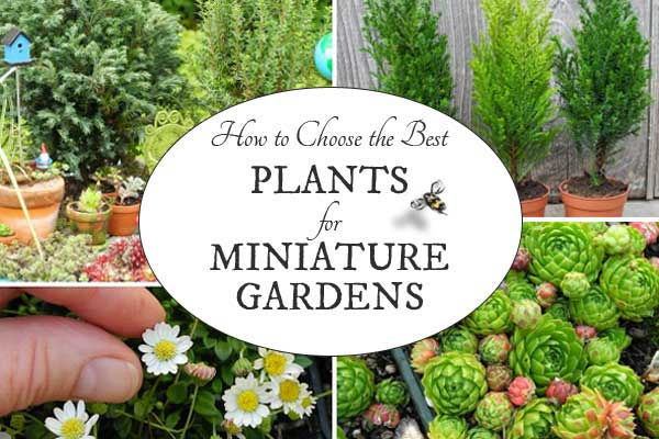 How to Choose the Best Plants for Miniature Gardens