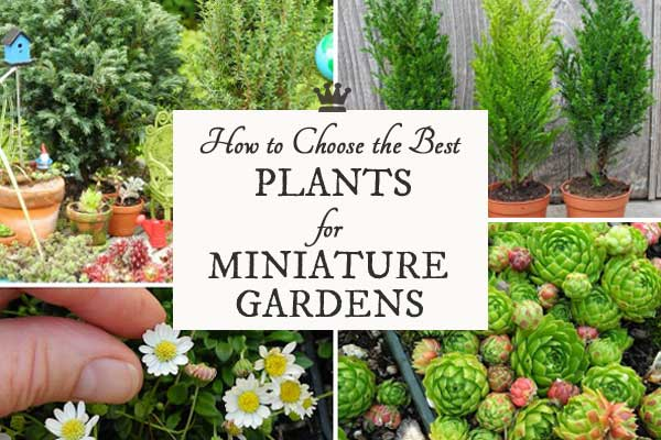 How to choose the best plants for miniature and fairy gardens
