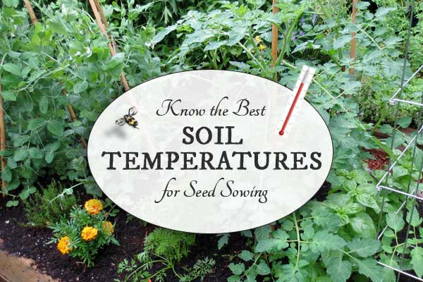 Best Soil Temperatures for Sowing Seeds | Free Printable