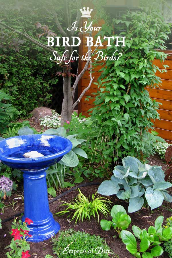 Is your bird bath safe for the birds? Find out with these safety tips.