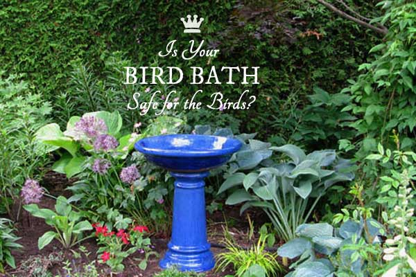 Is your bird bath safe for the birds? Here's some tips.