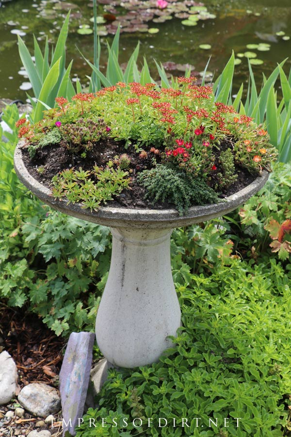 Use shallow-rooted plants like succulents and rockery plants for bird baths.