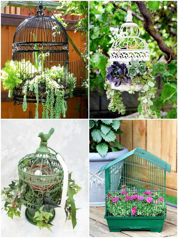 Examples of birdcage planters in the garden.