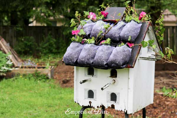 Birdhouse with living green roof