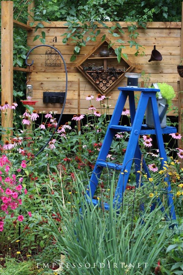 Old blue ladder in flower garden.