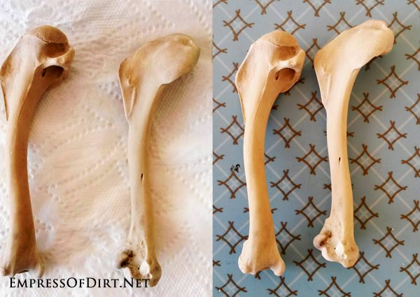 The tutorial shows how to clean animal bones (free of soft tissue) to prepare them for display in a collection. This is suitable for homeschoolers and others who wish to keep common animal bones for a collection or display.
