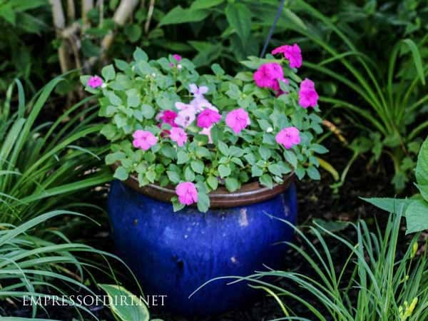 Add colorful flowers and containers to your shade garden.