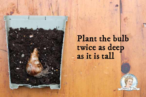 Bulb planting tips for beginners