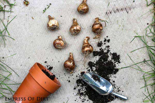 You can plant flowering bulbs in containers but be sure to protect them from freezing winter temperatures.