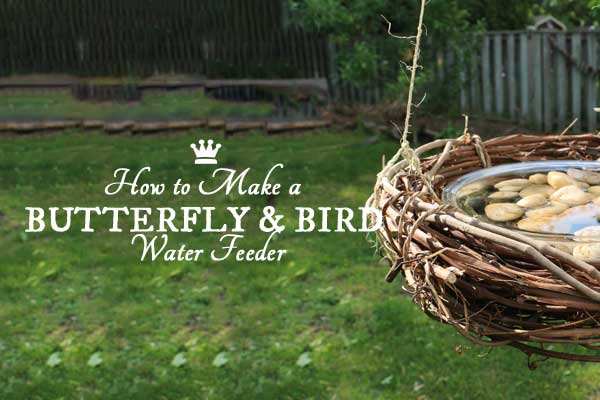 Make a simple water feeder for the butterflies and birds