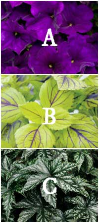 Plant selections including Supertunia, Coleus, and Begonia.
