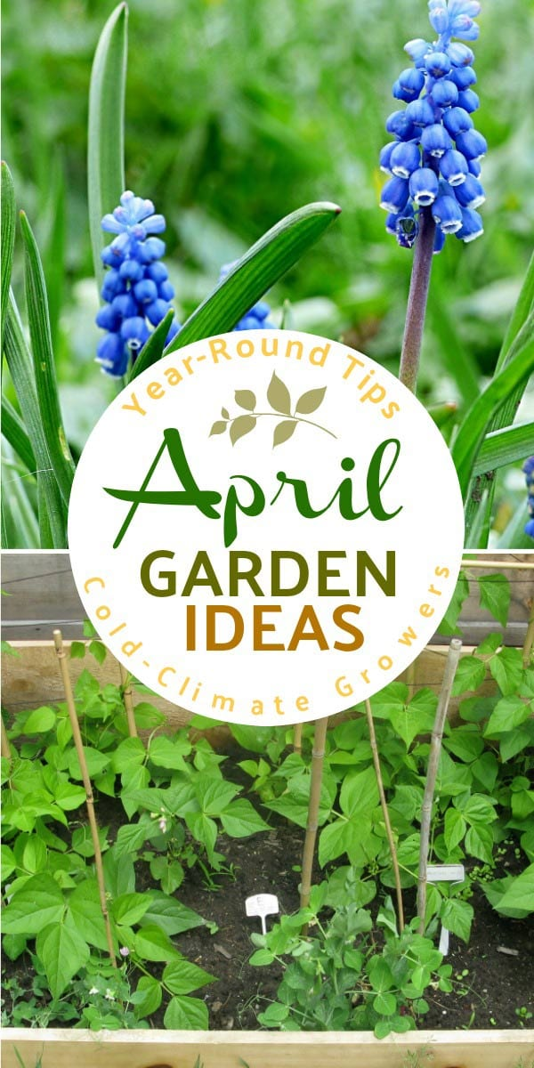 April garden tasks with Empress of Dirt. See what you can make and grow.