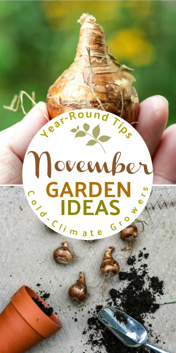 As fall turns to winter, and freezing temperatures set in, November is a quieter time in the four-season garden. It's a month to catch our breath, get caught up on some nice-to-be-done tasks, craft from the garden, and prepare for the growing season ahead.
