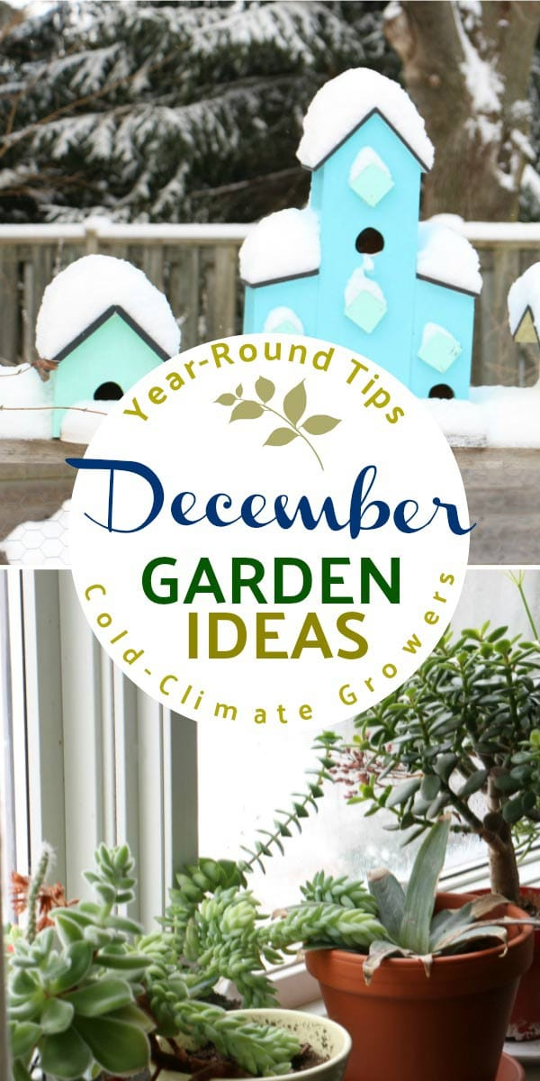 What to make and grow in December for year-round gardeners in a cold climate.