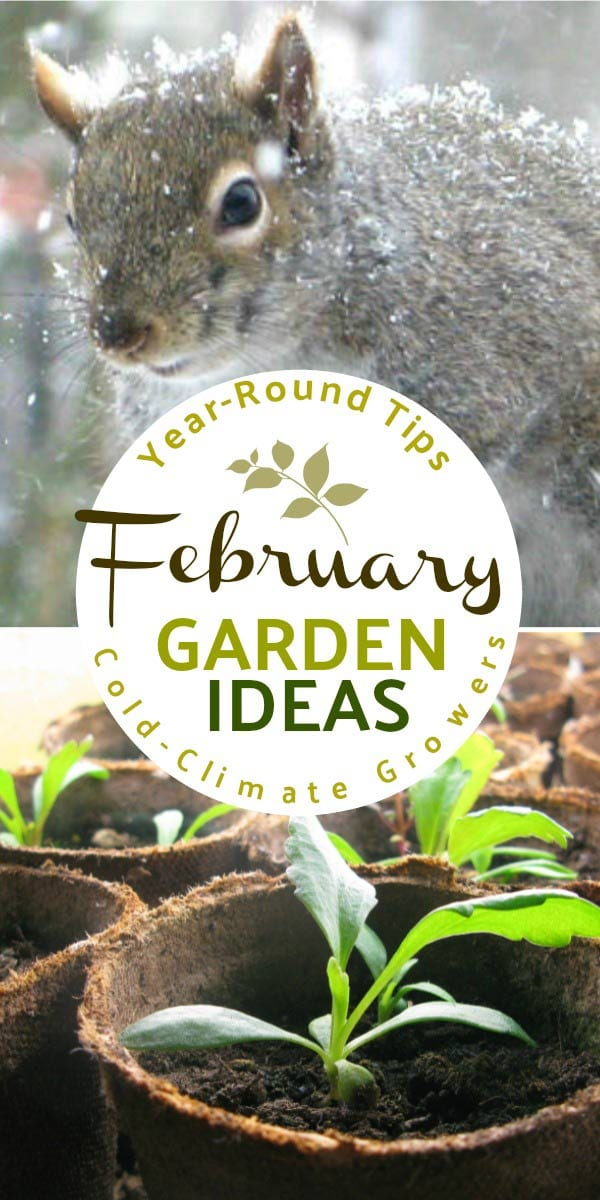 What to make and grow in February for year-round gardeners in a cold climate.