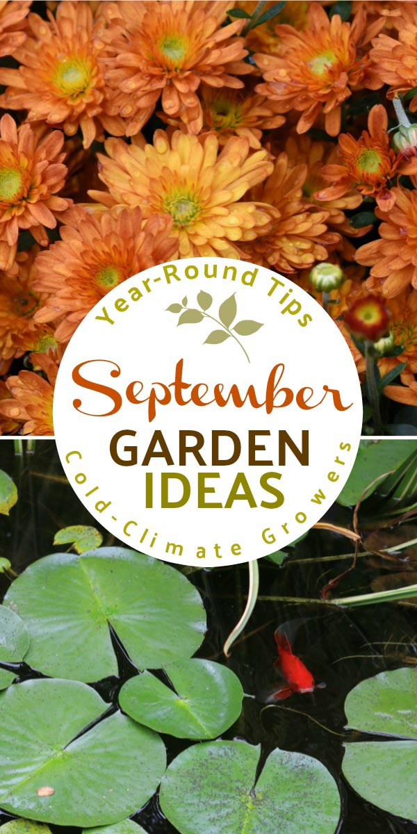 September garden tasks with Empress of Dirt. What to make and grow in the autumn garden.