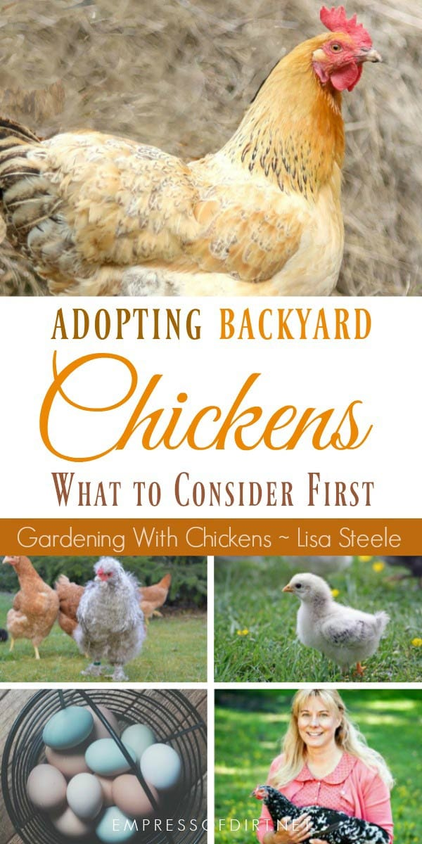 Love backyard chickens? If you are thinking about getting hens, there are some important things to consider first to make sure you are ready for the comittment and provide a good home for these beloved egg-layers for many years to come.