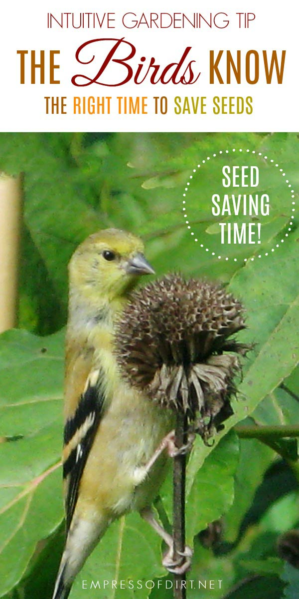 If you are wondering when it's the right time to save garden seeds for the future, there's a very hand hint fluttering around the garden.