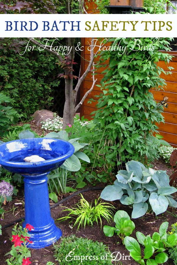 The best birdbaths are safe for the birds. These tips show how to choose the right depth and style so the birds can bathe and drink safely in your garden.