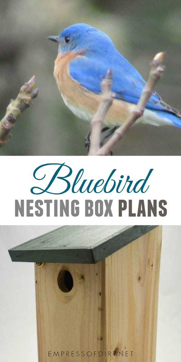 How to Build a Nesting Box for Bluebirds