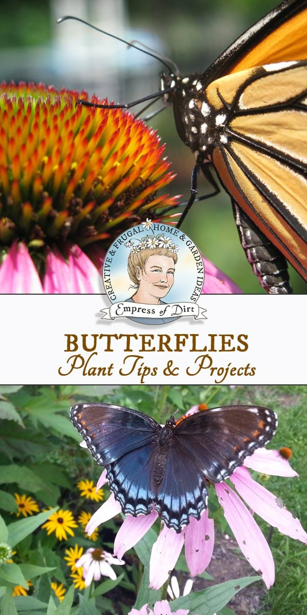 Find out how to attract butterflies to your garden with the right plants and garden design, plus creative butterfly-inspired crafts and DIY projects.