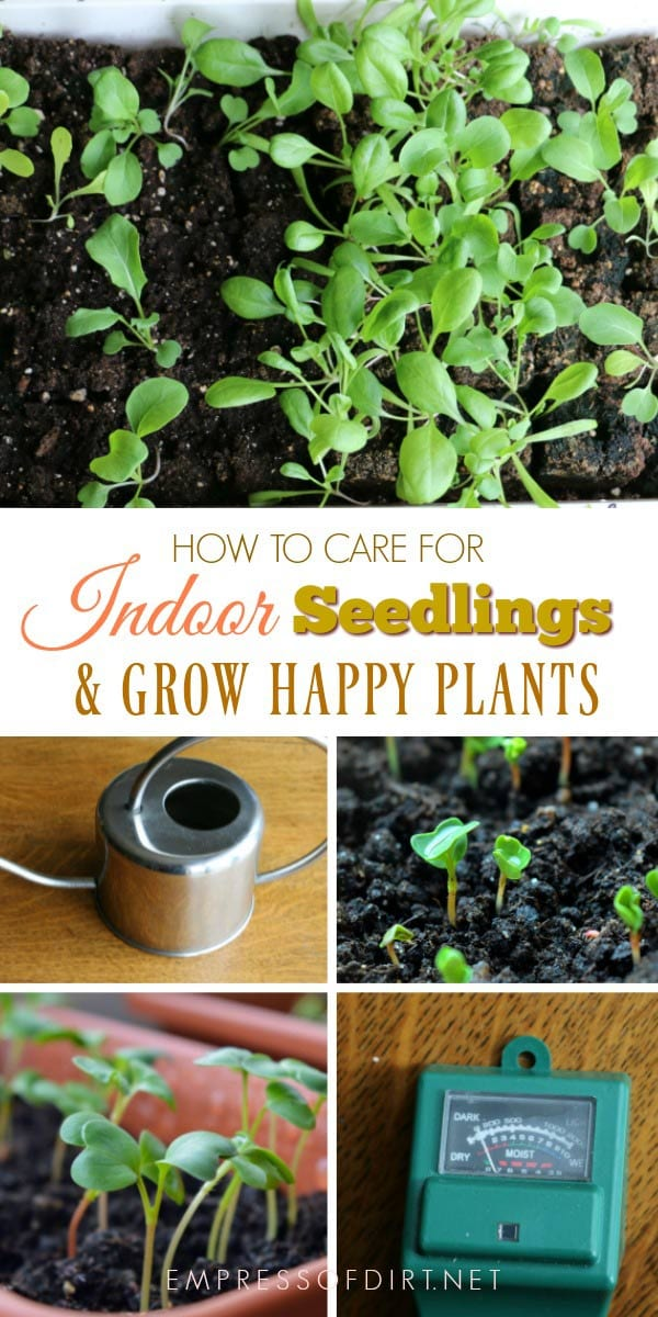 How to care for indoor seedlings and grow happy plants.