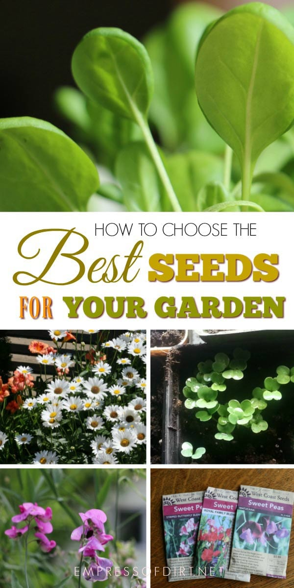 How to choose the best seeds suitable for your garden.