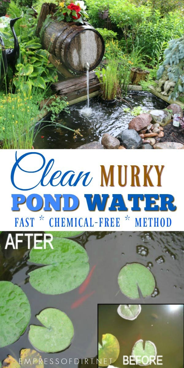 How to clean gross murky pond water fast without chemicals for Koi pond water murky