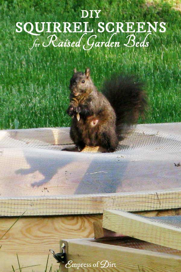 Squirrel screens are one way to keep cats, squirrels, and other wild animals from digging in raised garden beds.
