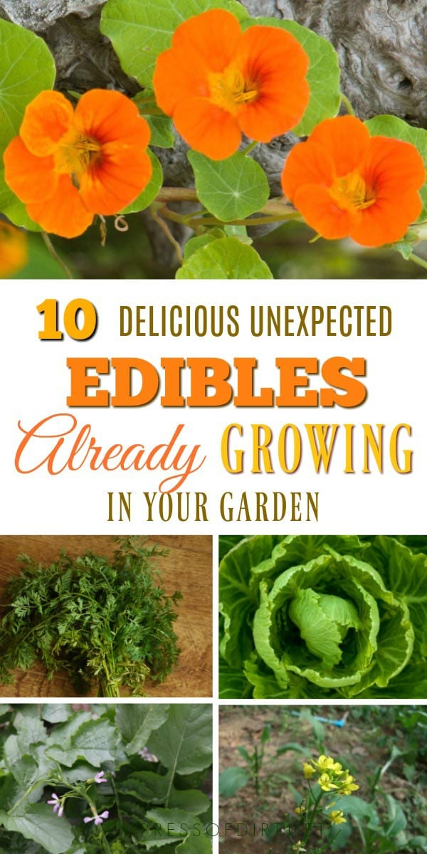 Did you know there are lots of edible foods growing in our gardens that we never eat? See what you can forage in your own backyard.