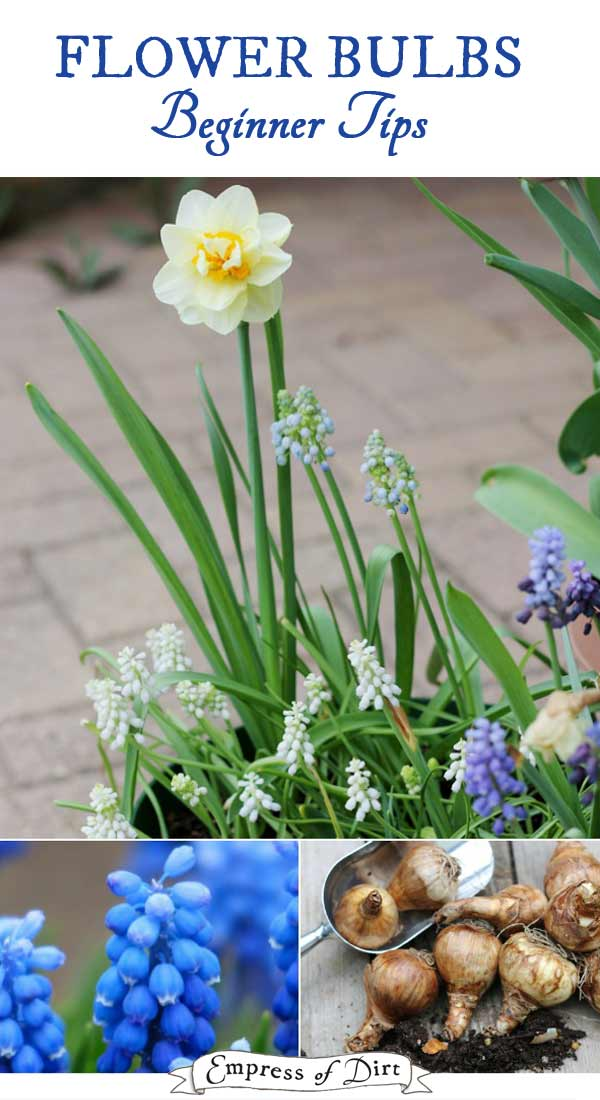 If you are new to gardening or have never planted flowering bulbs, this is for you