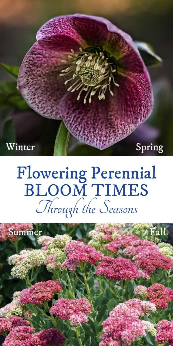 Flowering perennial bloom times through the seasons