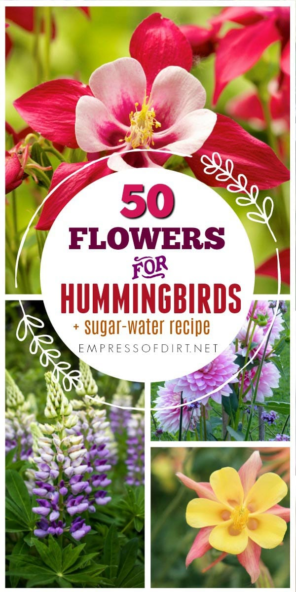 These flowers provide nectar for hummingbirds and keep them active in your garden.