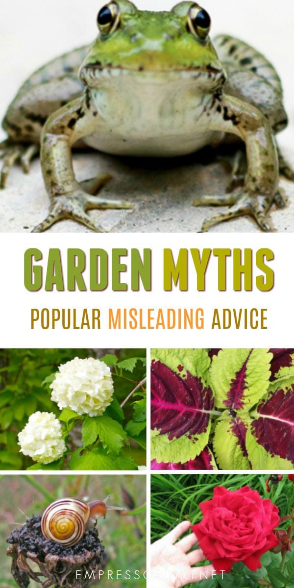 Populare garden myths and wives' tales that just keep spreading.