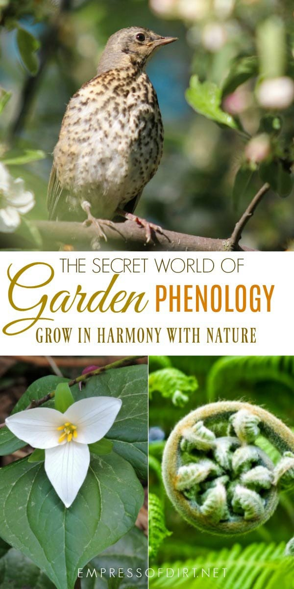 Phenology: Using Natural Signs & Signals to Grow Your Best Garden