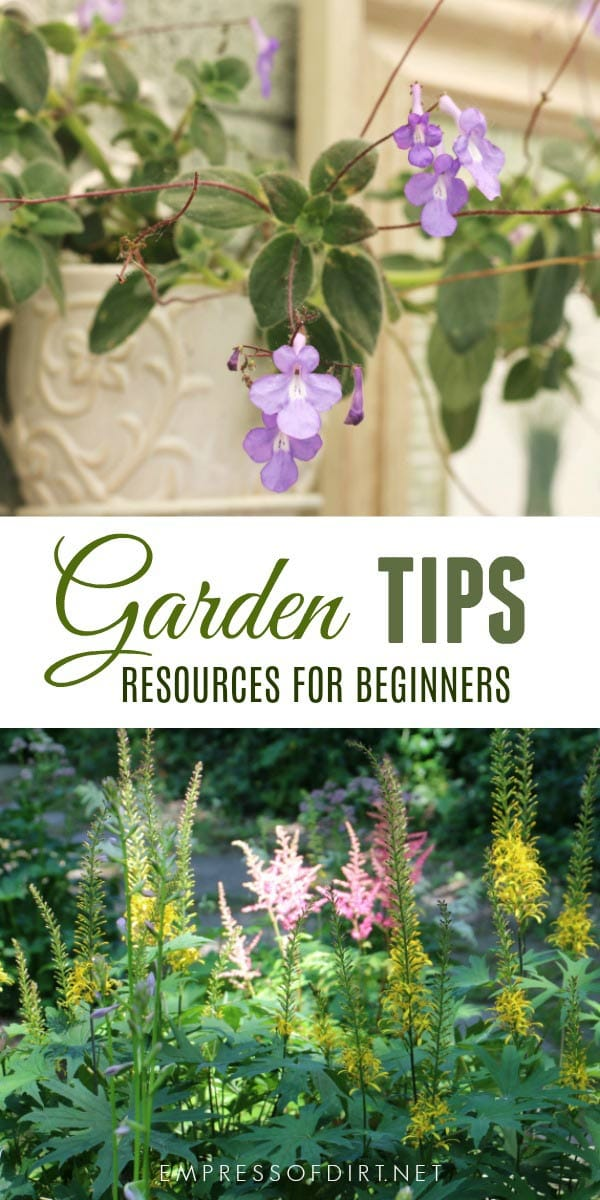 Is your clematis turning brown? What kind of hydrangea is this and when should I prune it? How can I have big, tall delphiniums? Which live plants are best in a miniature garden? Which vegetables grow best in sandy soil? These are just a few of the questions answered in these top gardening posts on Empress of Dirt.