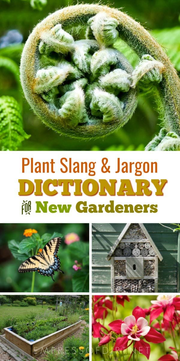 Simplifying the world of garden jargon for new gardeners, one slip, flat, and yard at a time.