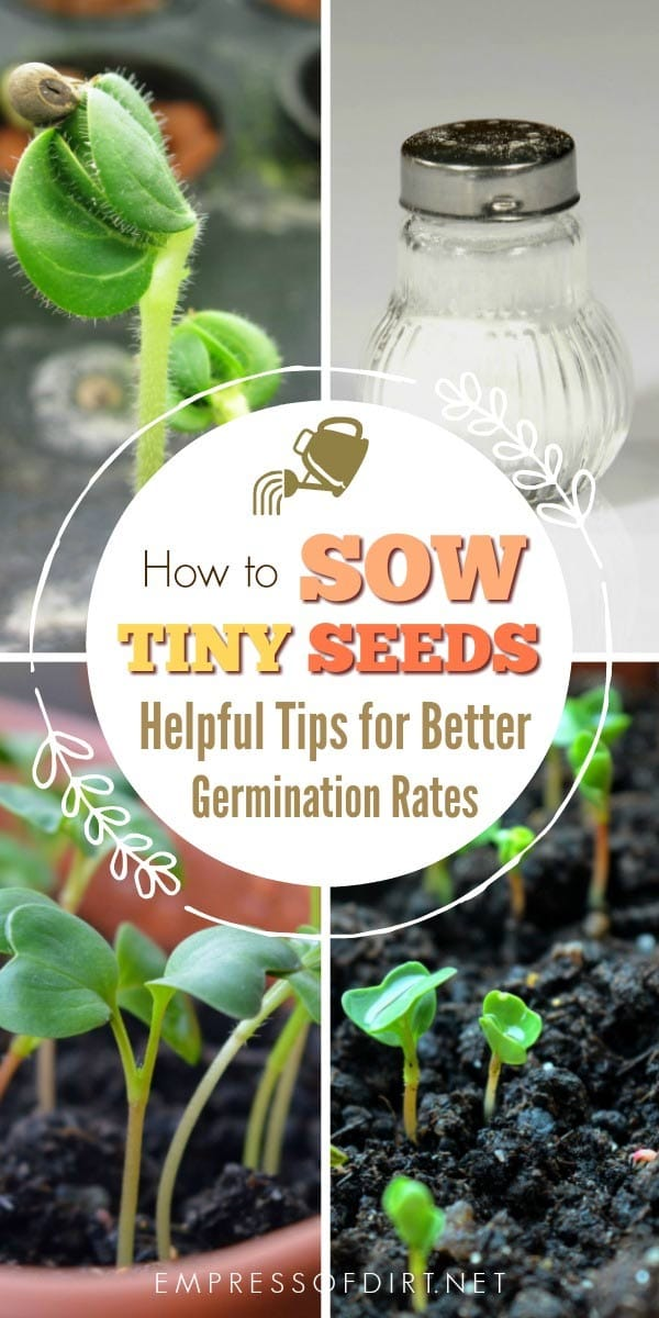 Have you ever opened a seed packet with seeds so tiny you wonder if it's right? It's those tiny seeds—including carrots, poppies, and lobelia—that can slip from our fingers, or wash away when watered, that require special care. The tips show several ways to keep the seeds where you want them and ensure better germination rates.