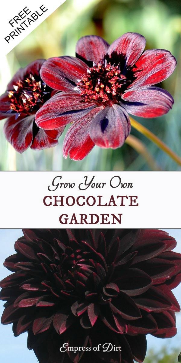Grow a Chocolate-Themed Garden | Fragrance and Color