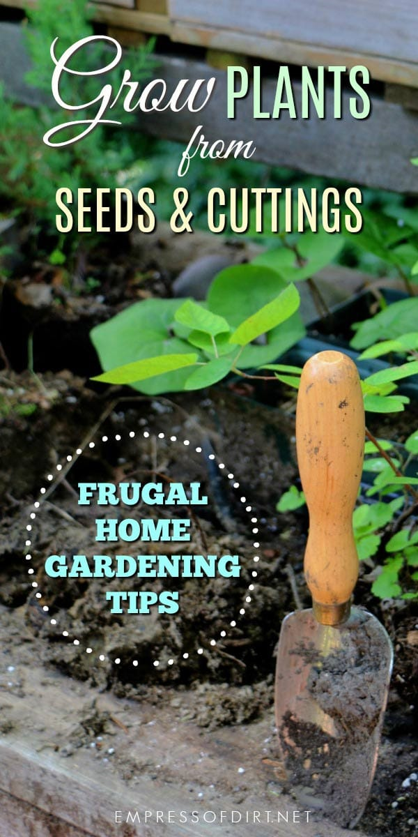 How to grow plants from seeds and cuttings to propagate indoor and outdoor garden plants.