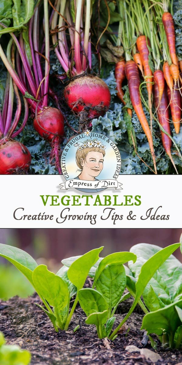 Growing tips for garden vegetables, plus creative ideas and recipes.