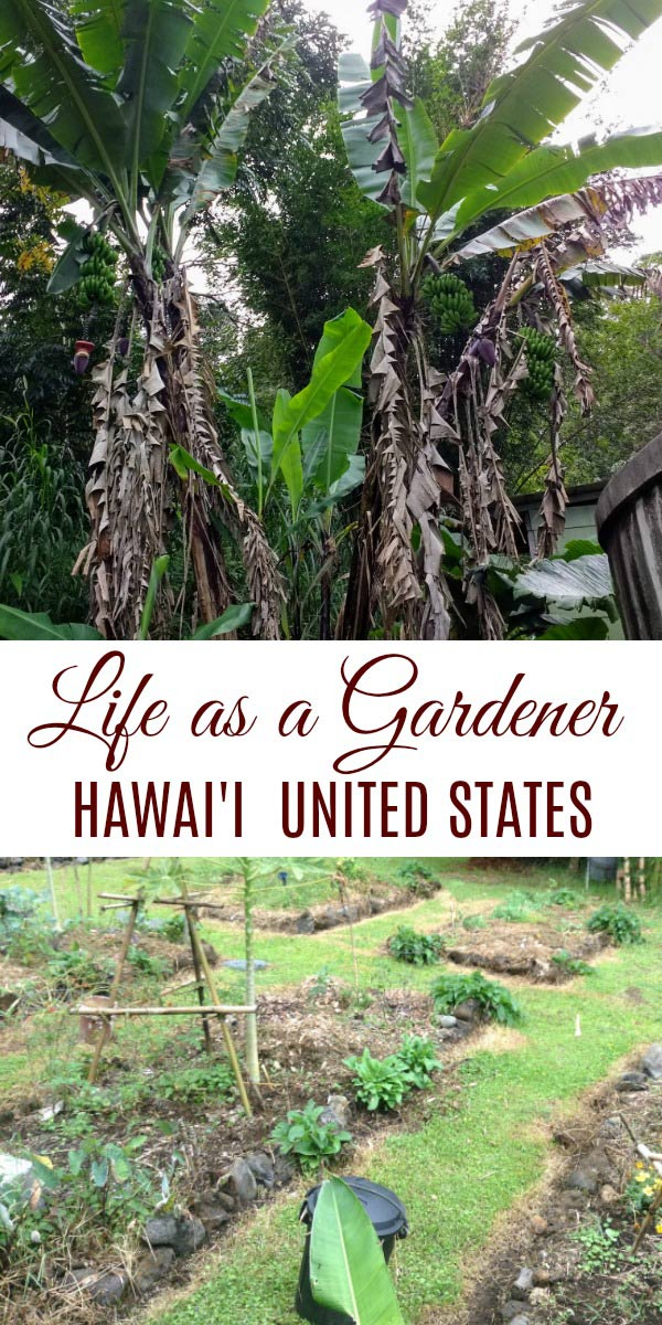 Life as a gardener in Hawai'i, United States with Kris of Attainable Sustainable.