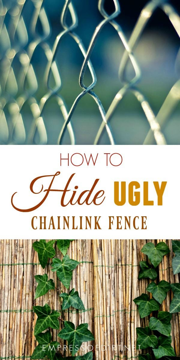 Tips for hiding and ugly chainlink fence for better appearance and privacy.