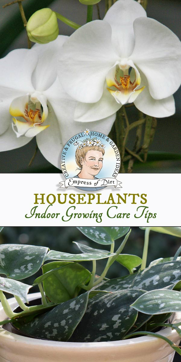 Tips for growing houseplants, including watering, care, propagation, and recommended resources for happy indoor plants.