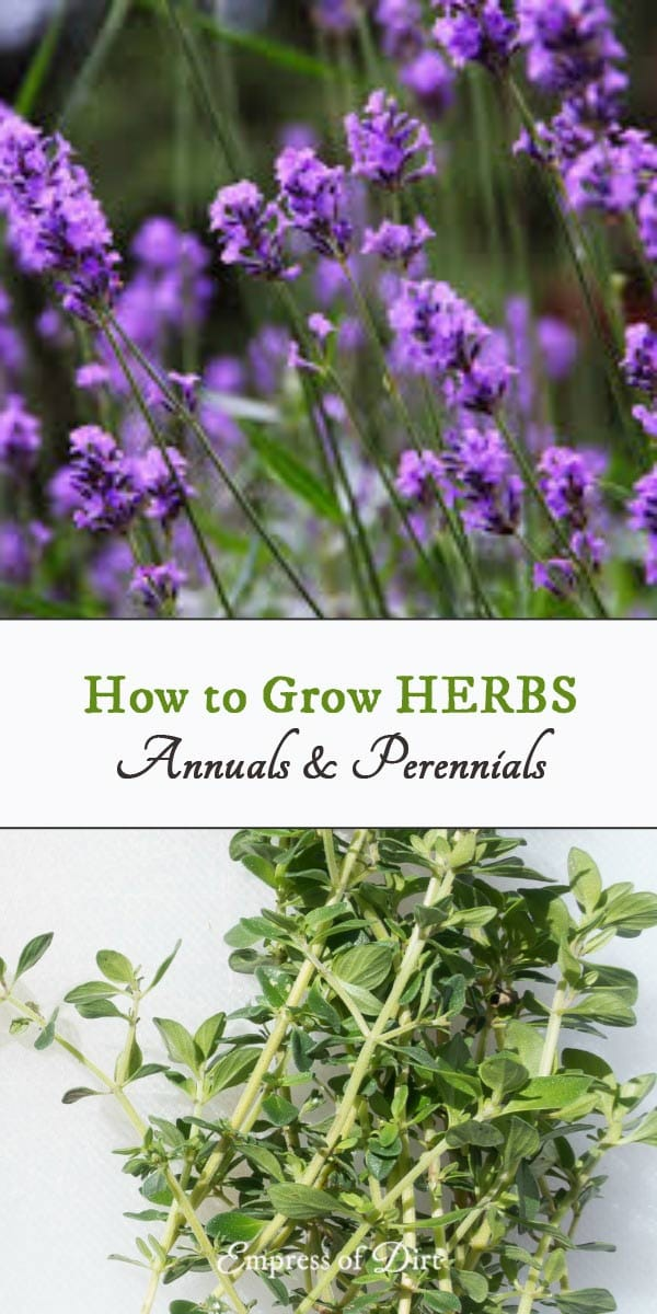 Growing Herbs | Annuals and Perennials | Printable